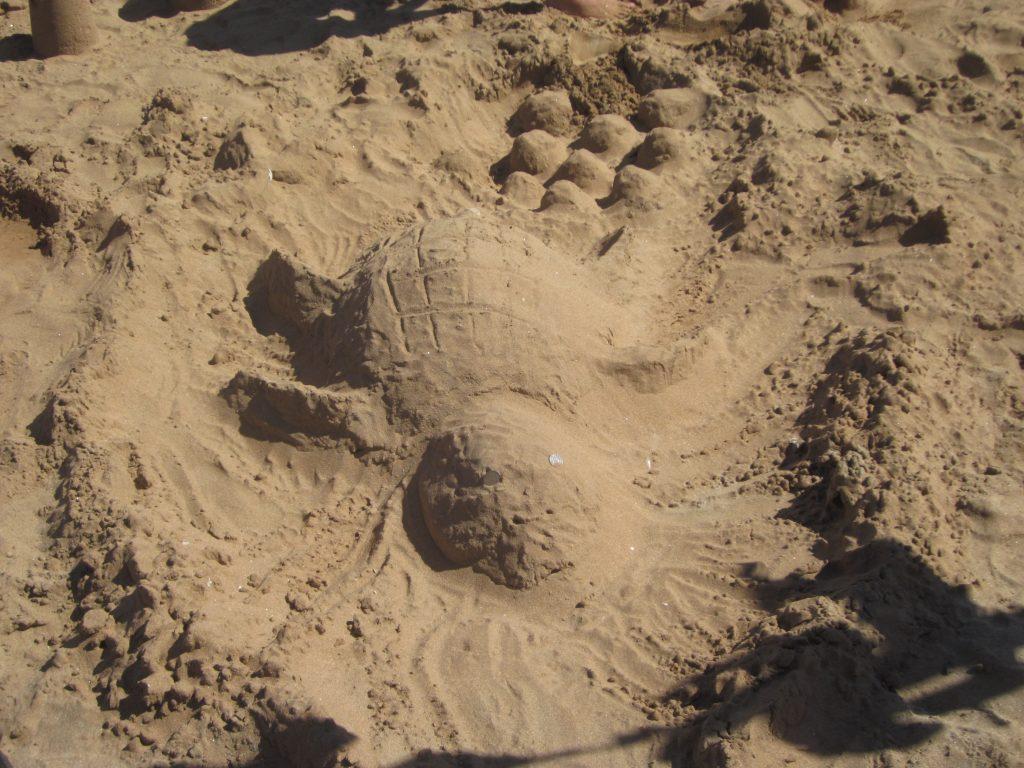 kura-kura dari pasir