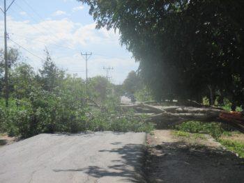 Lebar jalan ditutupi pohon besar