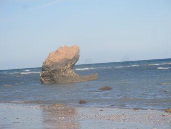 Si Tegar di ketika muncul ke permukaan saat air laut surut