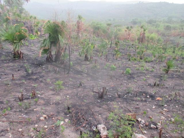 Ladang ini luasnya di atas 1 ha terletak di perbatasan desa Oenoni 2 Kec.Amarasi dan desa Oebesi Kec.Amarasi Timur, belum ditanam