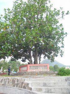 Pohon sukun bersejarah