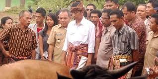 Pak Joko Widodo pernah ke Amarasi Raya melihat dari dekat peternakan sapi paron