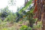 Salah satu sudut di kebun sekolah SMP Negeri 1 Fatuleu Tengah